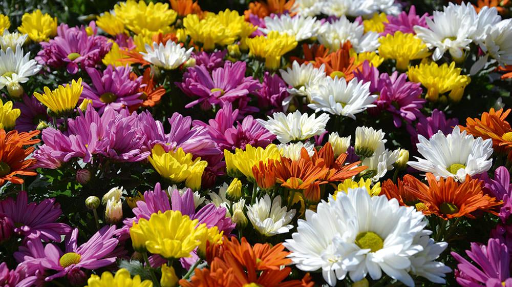 Lass Blumen Weinen Der Sterntaler